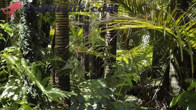 amazon ormanlari en buyuk orman dunynanin