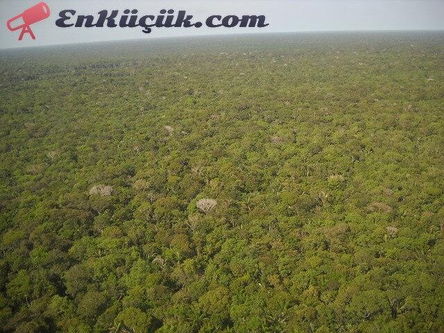 amazon yagmur ormani brezilya