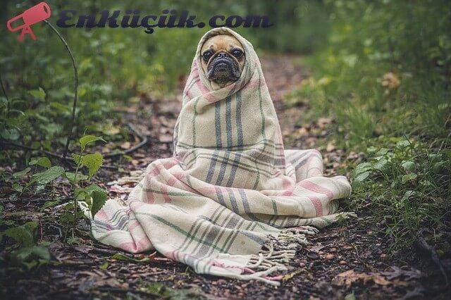en komik köpek fotoğrafı