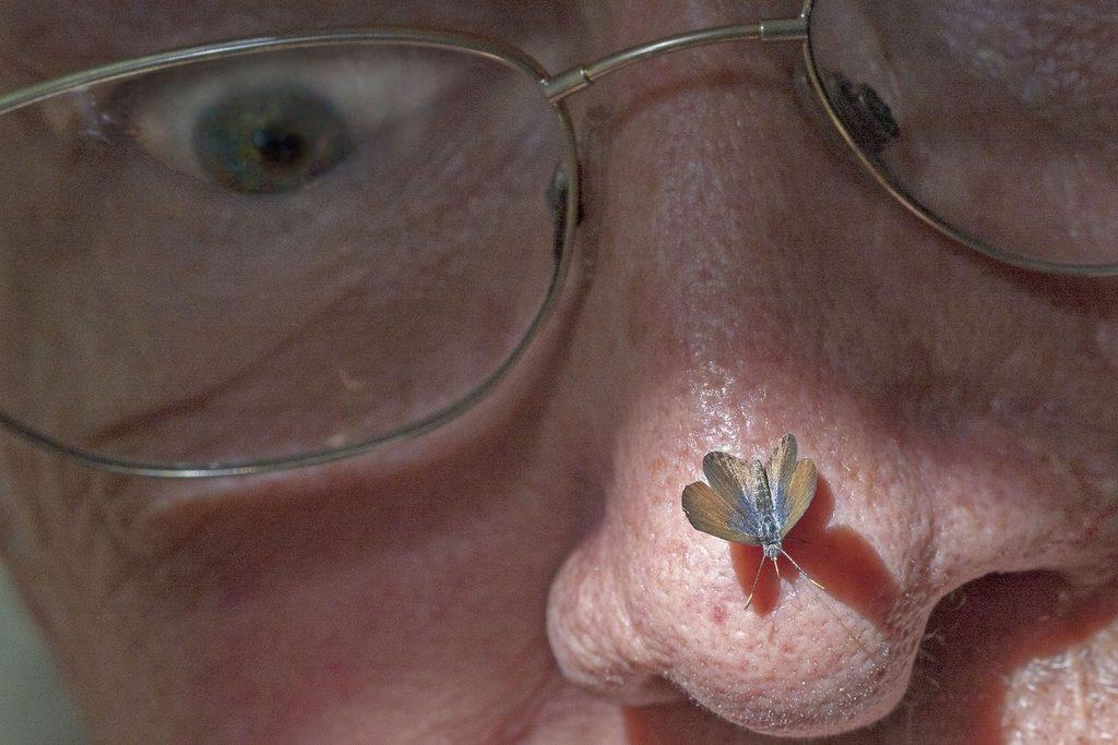 dünyanın en küçük kelebeği