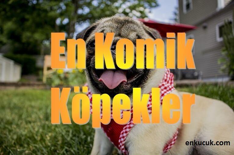 en komik köpekler, en komik köpekler video, en komik köpek resimleri